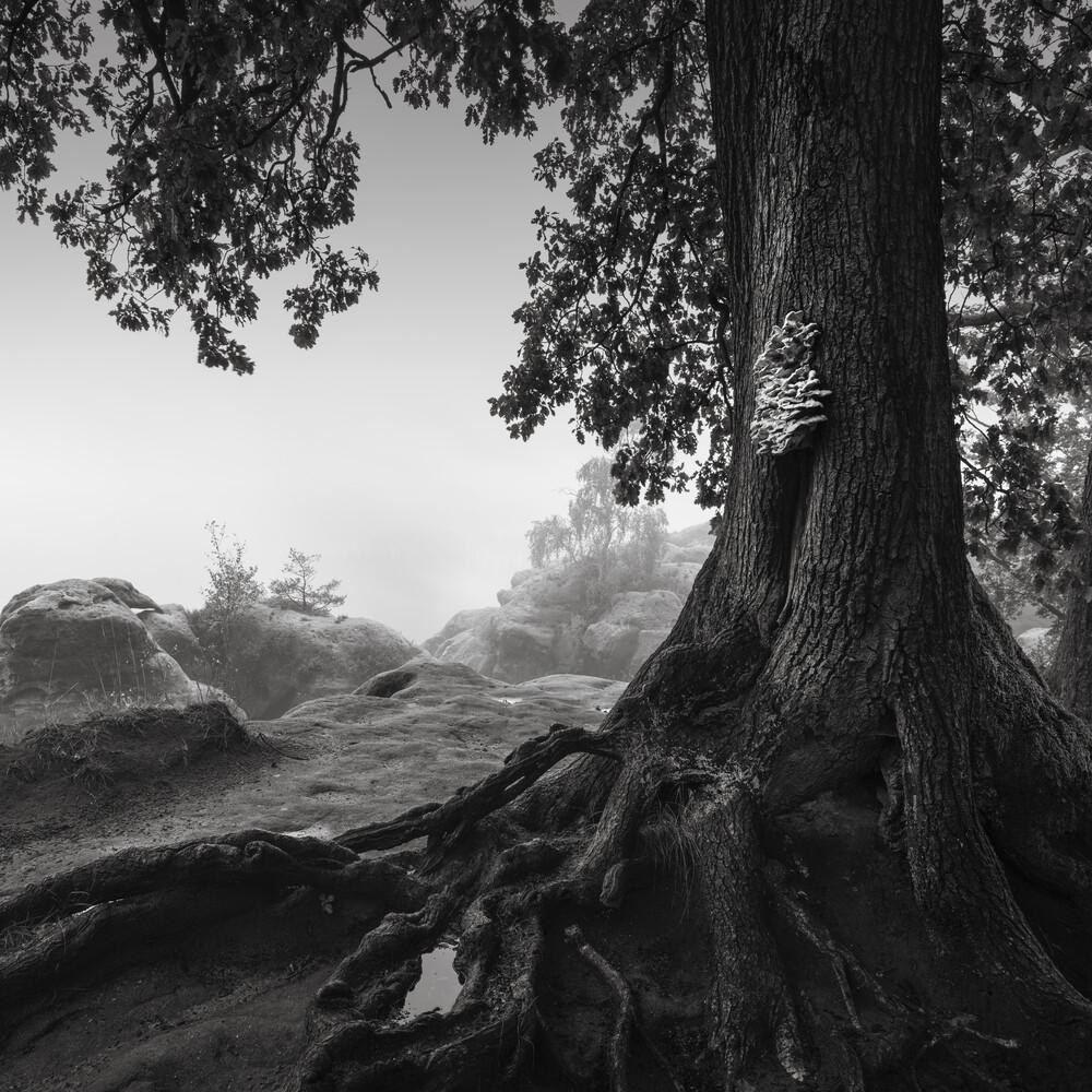 Alte Eiche - Sächsische Schweiz - Fineart photography by Ronny Behnert
