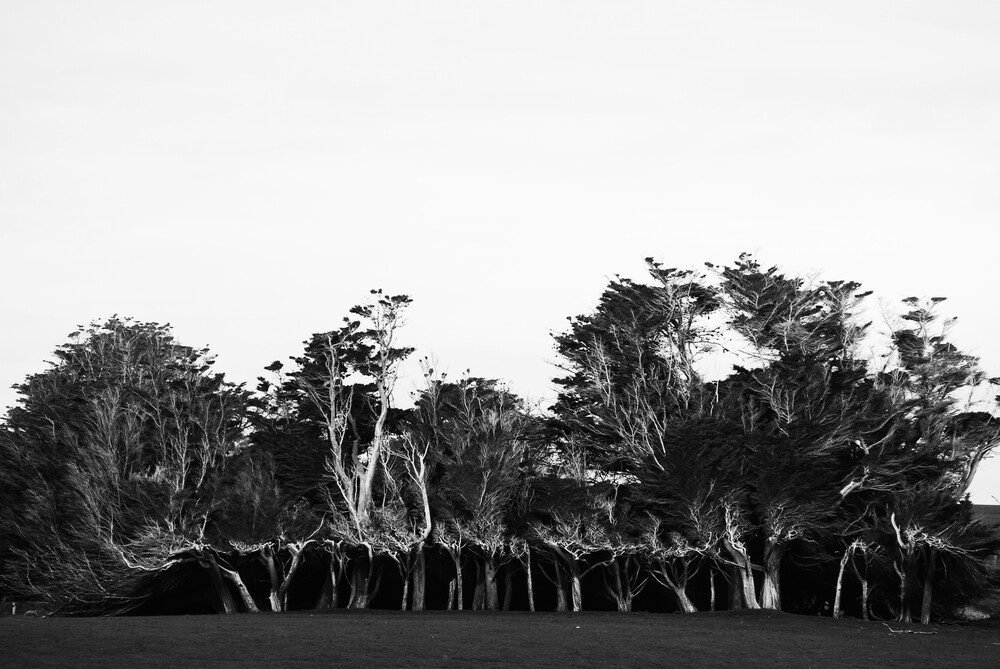 Two faced wood - fotokunst von Markus Enenkel