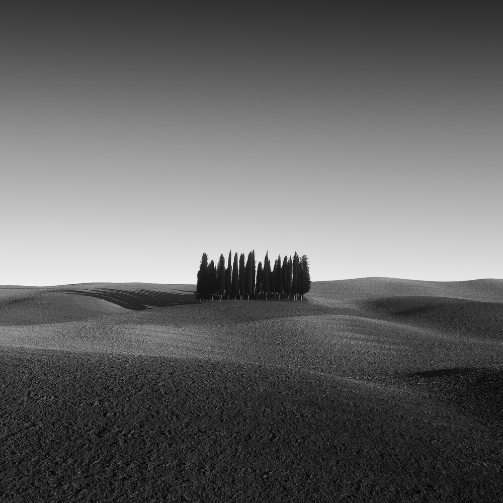 CYPRESS GROVE – TUSCANY - Fineart photography by Christian Janik