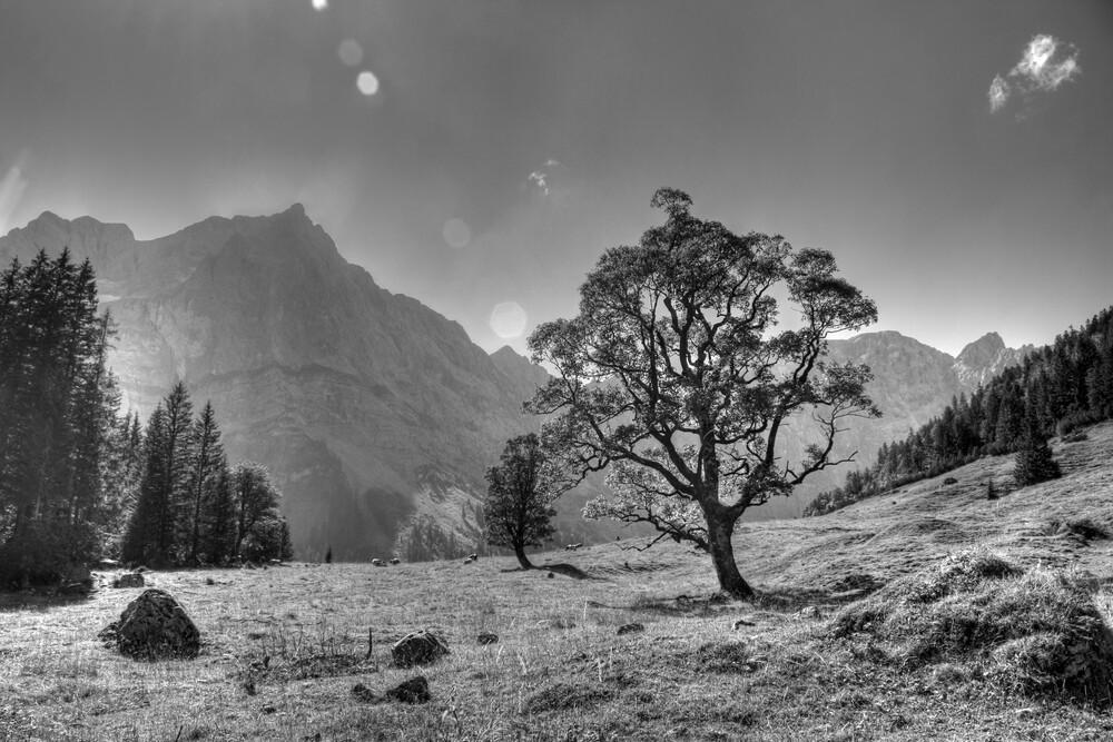 Bergahorn - fotokunst von Björn Groß