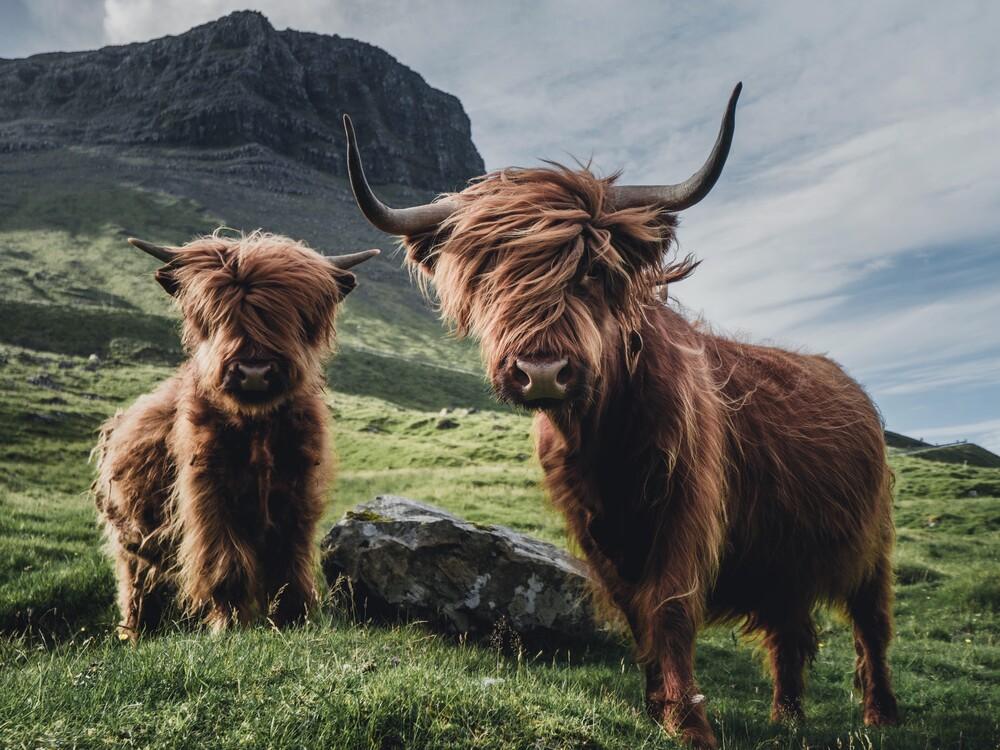 Die heimlichen Könige der Färoer. - fotokunst von Dominic Lars