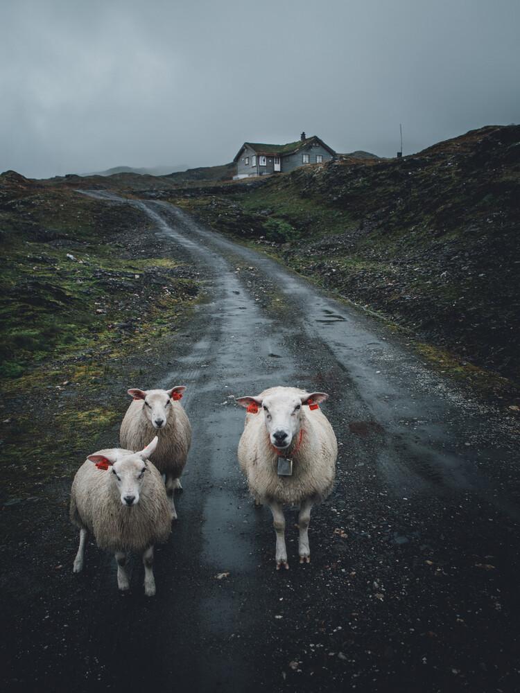 sheep thrills - fotokunst von Leo Thomas