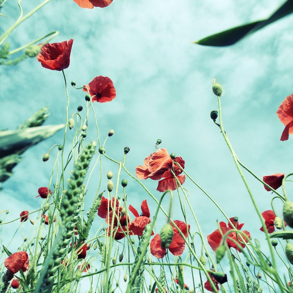 poppy - fotokunst von Kay Block
