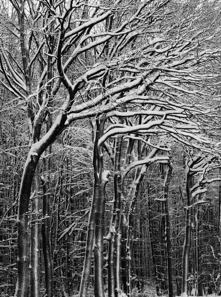 Schneewald - Fineart photography by Kay Block