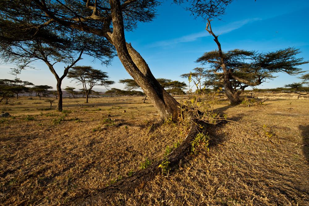 Akazie im Hochland von Äthiopien - fotokunst von Alfred Luef