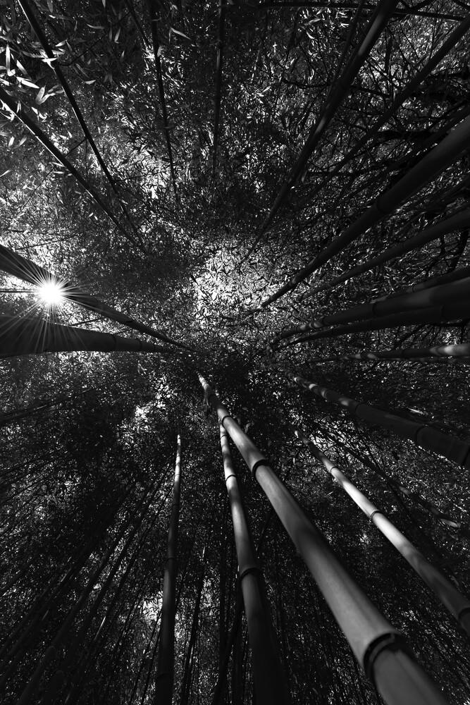 Bambuswald 007 - fotokunst von HEIKO HELLWIG