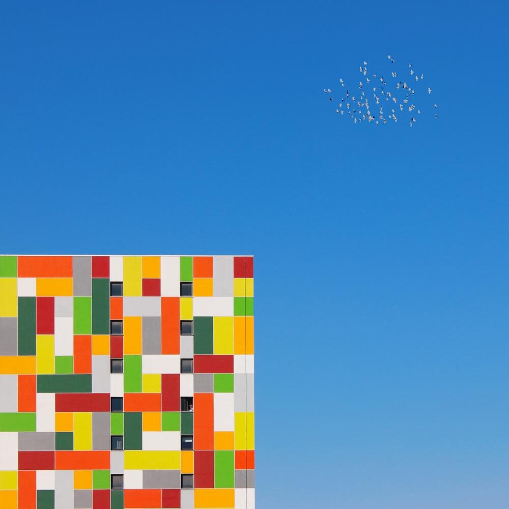 FLOCK - Fineart photography by Yener Torun