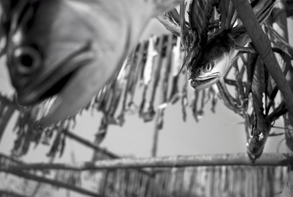 Dry fish, Bangladesh - fotokunst von Jakob Berr