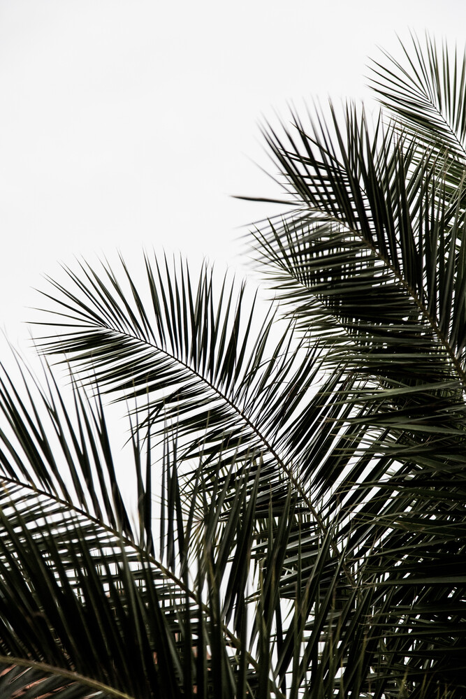 Palm Leaves 3 - Fineart photography by Mareike Böhmer