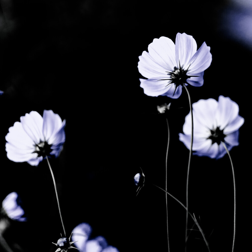 Wild Flowers 17 - Fineart photography by Mareike Böhmer