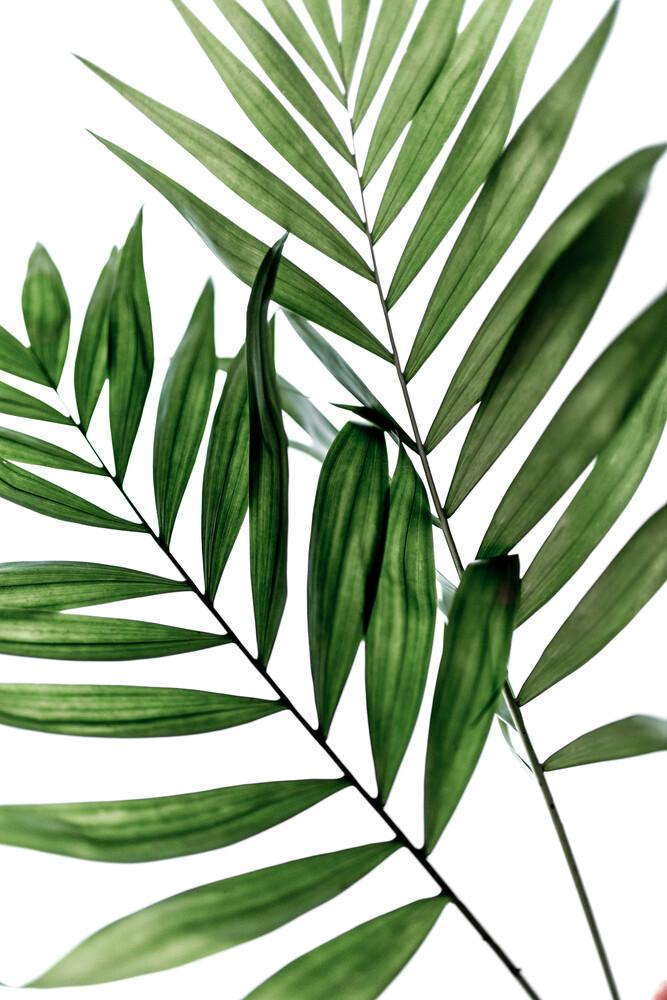 Leaves 4 - fotokunst von Mareike Böhmer