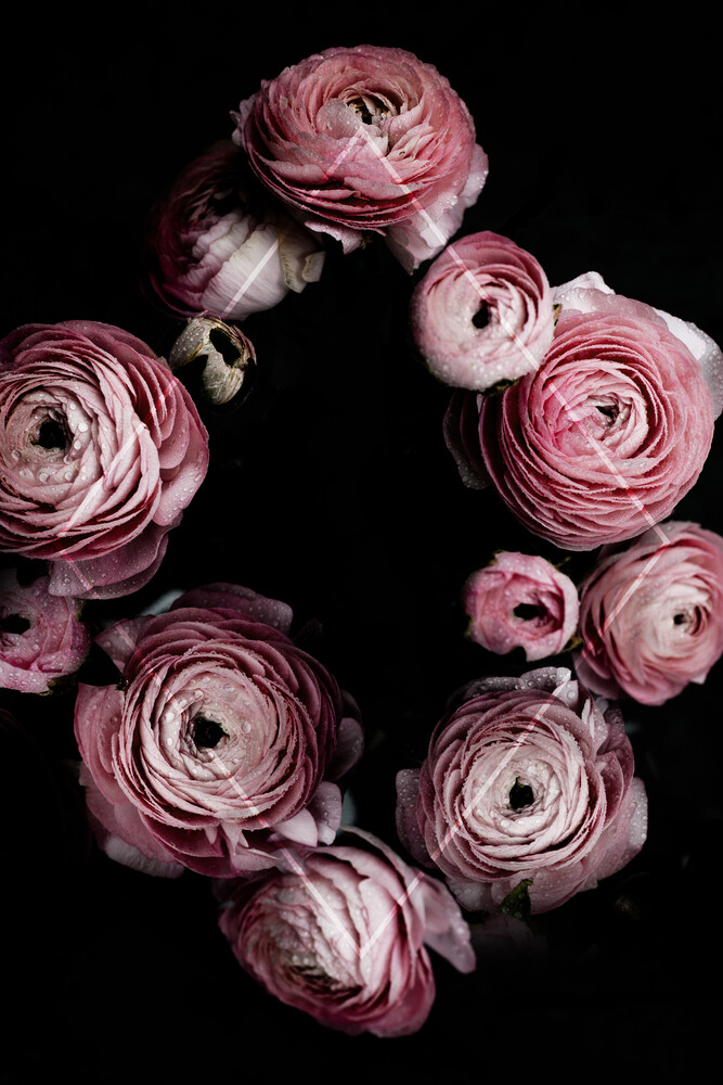 Blooming Geometry 1 - Fineart photography by Mareike Böhmer