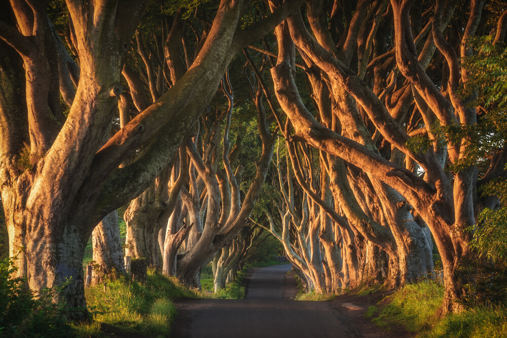 Irland Dark Hedges - fotokunst von Jean Claude Castor