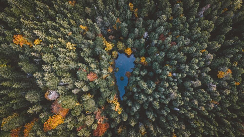 Herz des Waldes - fotokunst von Johannes Hulsch