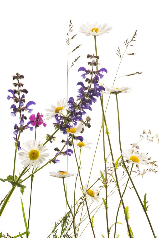 Wiesenblumen - fotokunst von Tan Kadam
