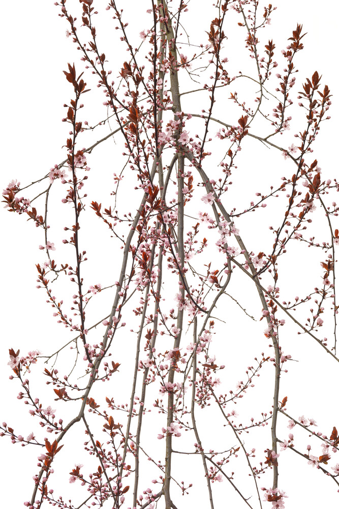 Mandelbaum - fotokunst von Tan Kadam