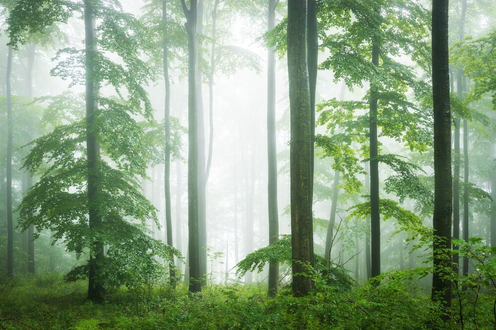 Wald VII - fotokunst von Heiko Gerlicher