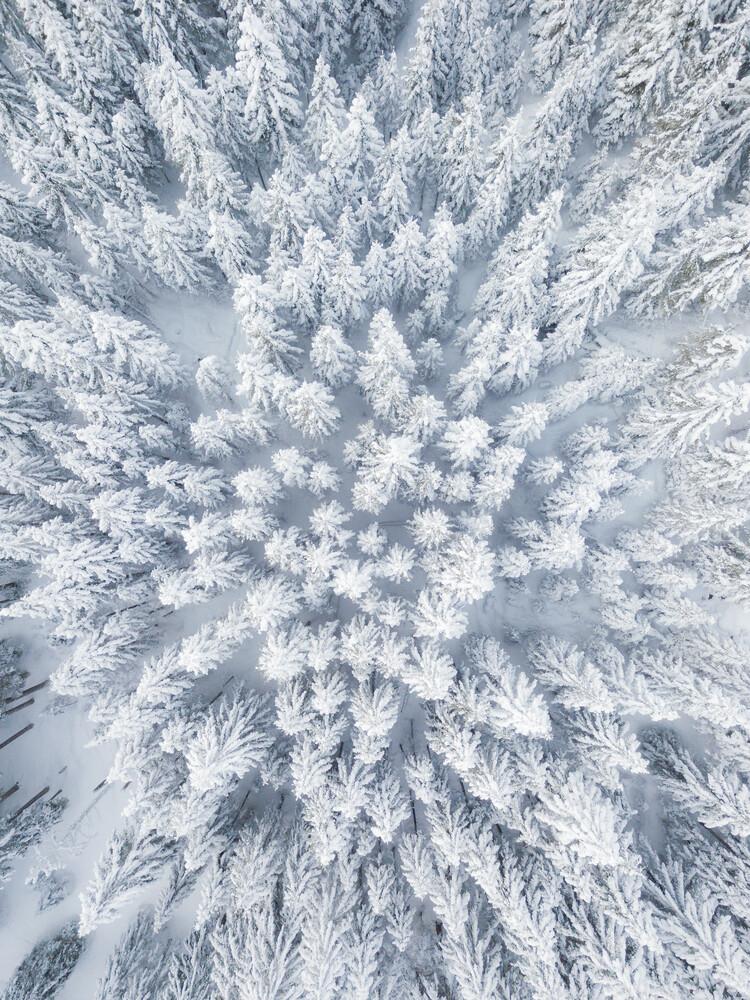 Army of Winter - Fineart photography by Gergo Kazsimer