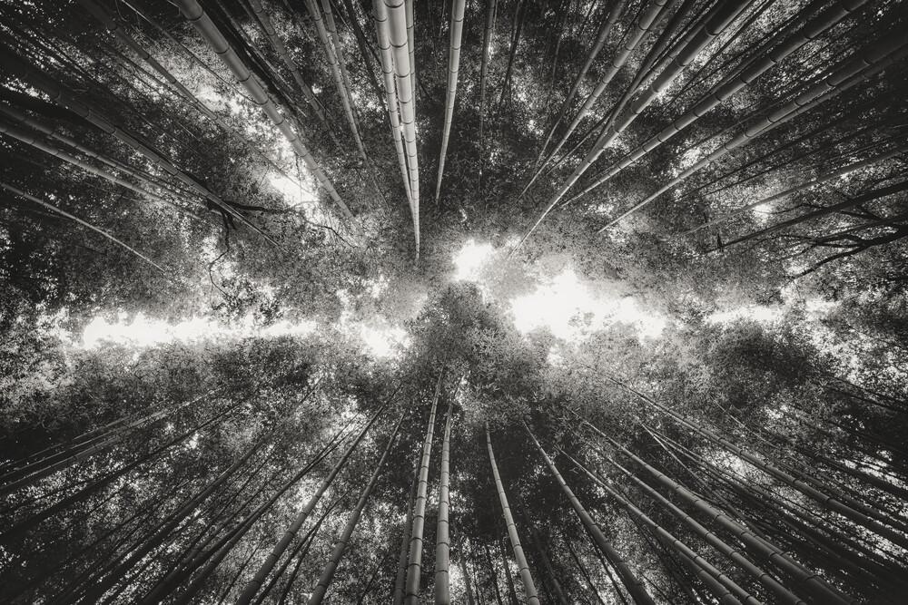 Der Bambuswald - fotokunst von Pascal Deckarm