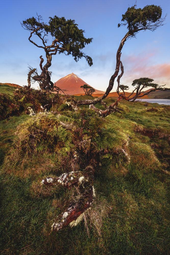 Bäume am Pico - fotokunst von Jean Claude Castor