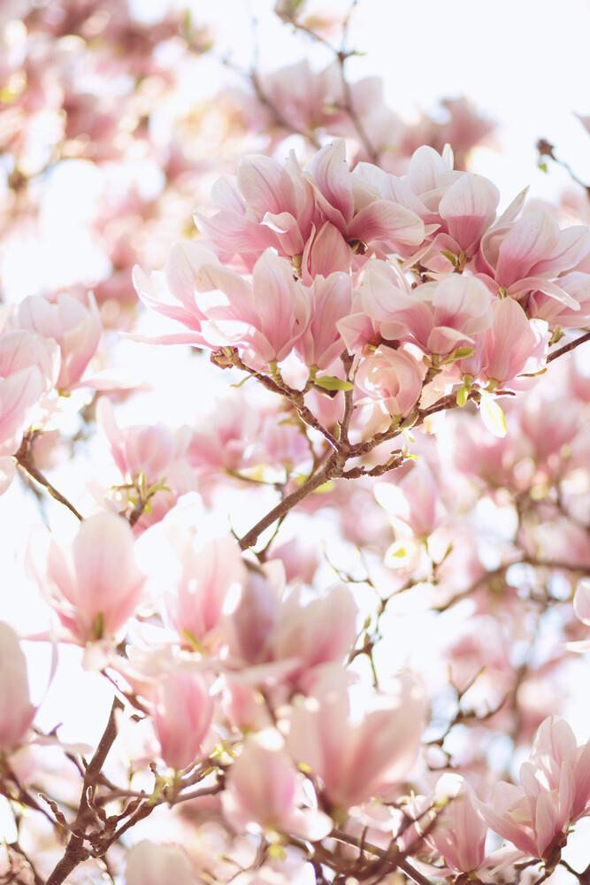 Magnolie - fotokunst von Sabrina Ziegenhorn
