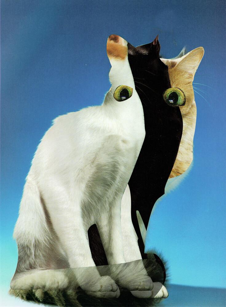 KatzenJammer 13 - fotokunst von Marko Köppe