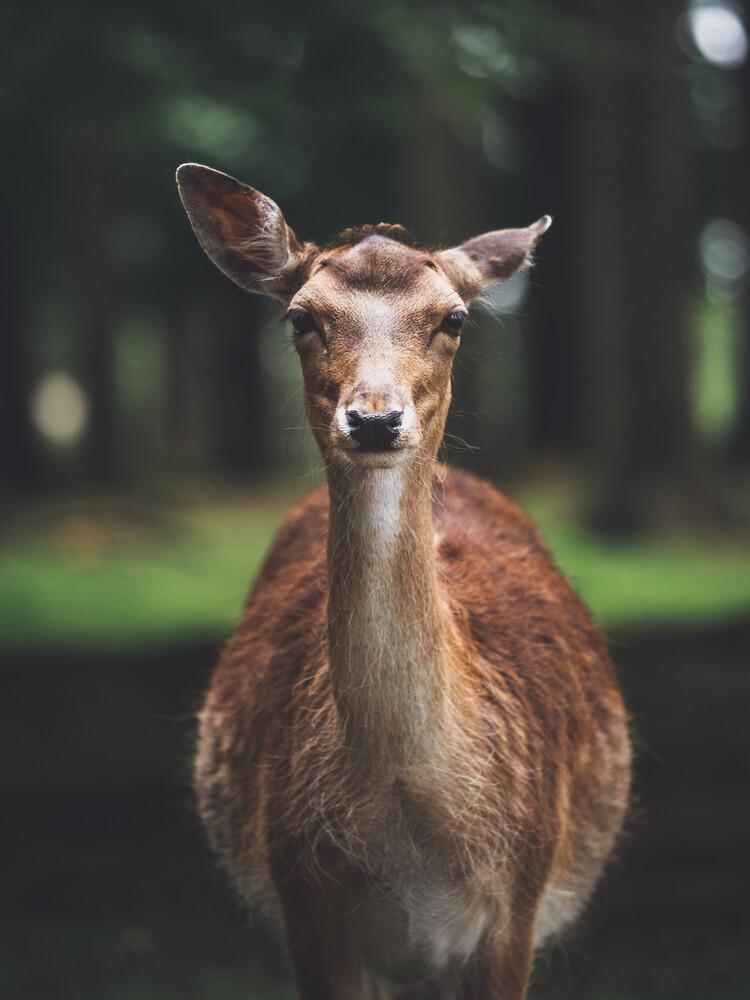Deer Portrait - Fineart photography by Gergo Kazsimer