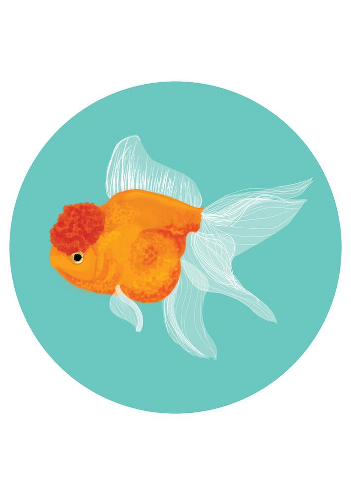 Fancy Goldfish - fotokunst von Katherine Blower