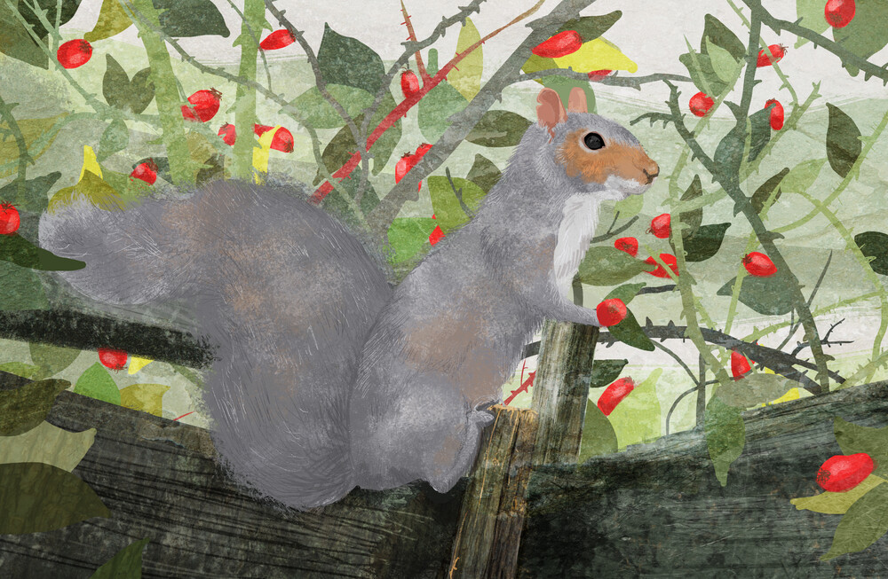 Grey Squirrel - fotokunst von Katherine Blower