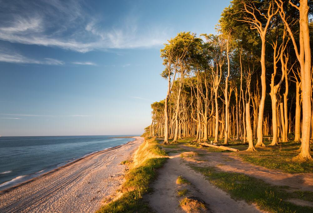 Küstenwald I - fotokunst von Heiko Gerlicher
