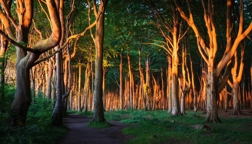 Küstenwald II - fotokunst von Heiko Gerlicher