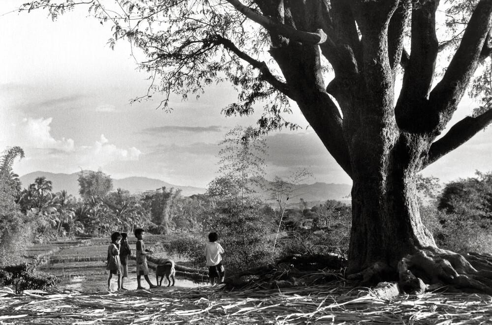 Children at the Big Tree - Central Highland - Vietnam - Fineart photography by Silva Wischeropp