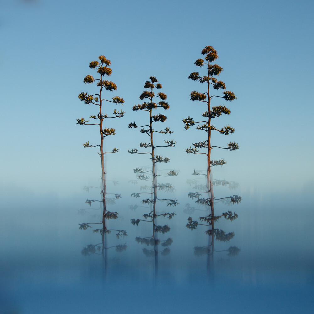 3 Blüten der Agave - fotokunst von Nadja Jacke