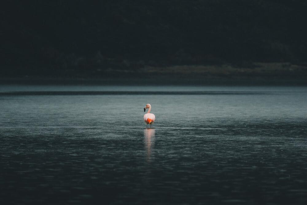 Flamingo in Patagonien - fotokunst von Ueli Frischknecht