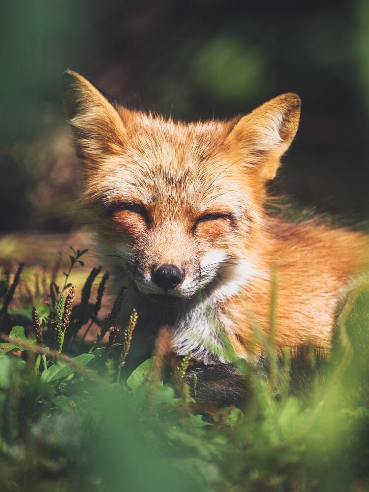 Sleepy Little Fox - fotokunst von Gergo Kazsimer