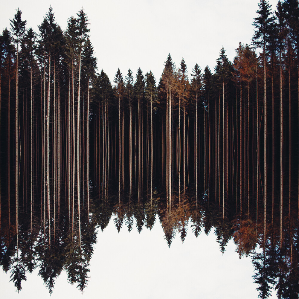 Woods - Fineart photography by Marc Leppin