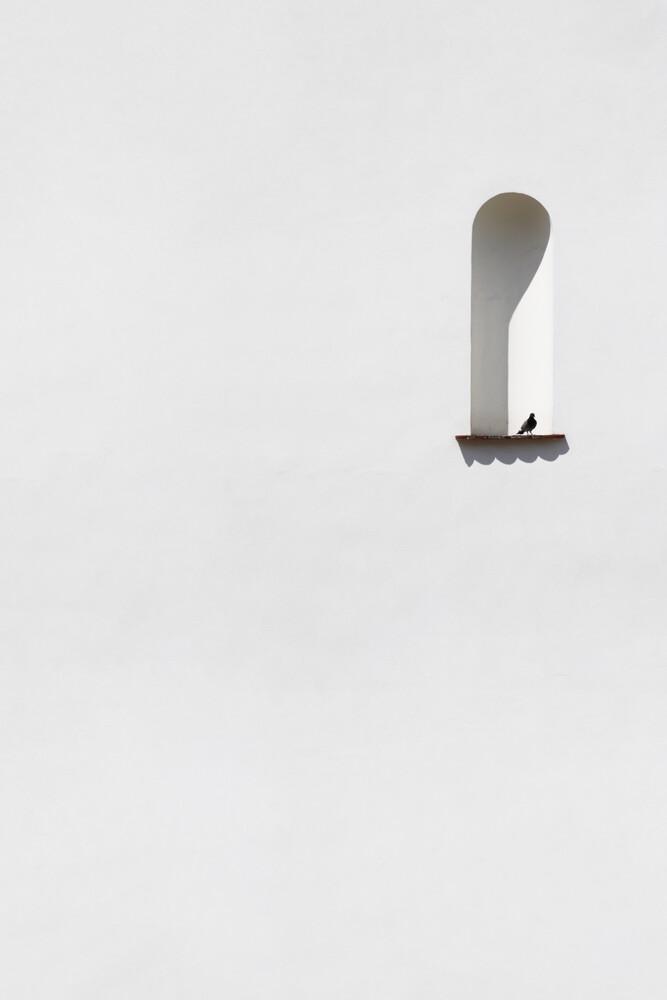 Lonely dove - fotokunst von Marcus Cederberg