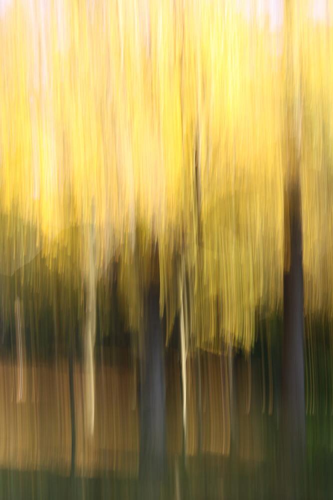 autumn abstract #o9 - fotokunst von Steffi Louis