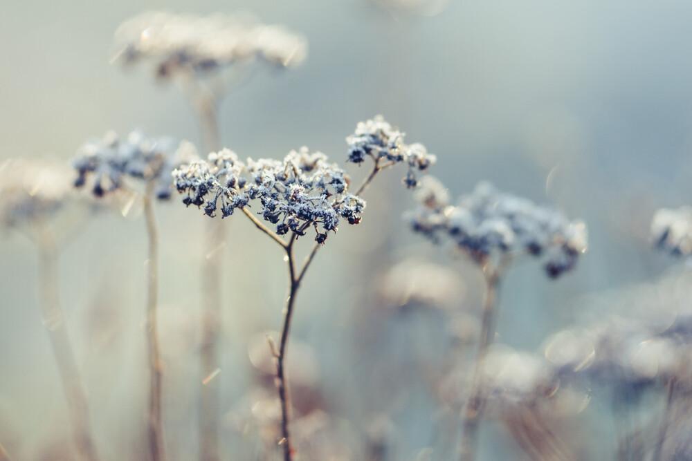 Frostige Schafgarbe - fotokunst von Nadja Jacke