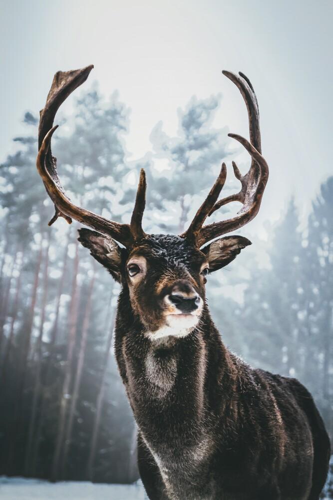 King Of The Woods - fotokunst von Patrick Monatsberger