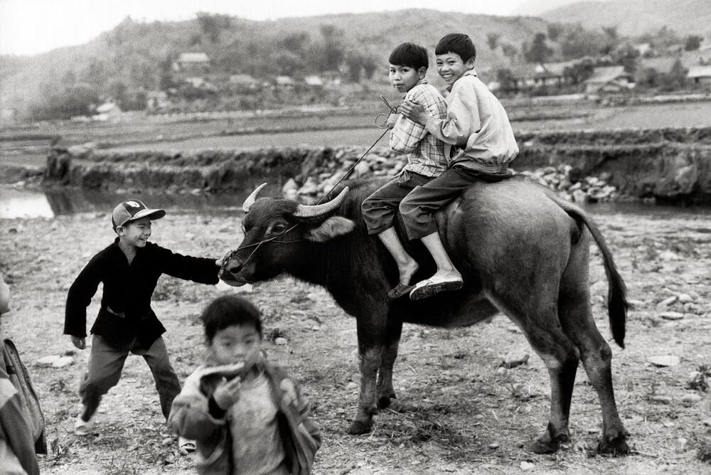 Buffalo Ride - Tuan Giao - Northwest Vietnam - fotokunst von Silva Wischeropp