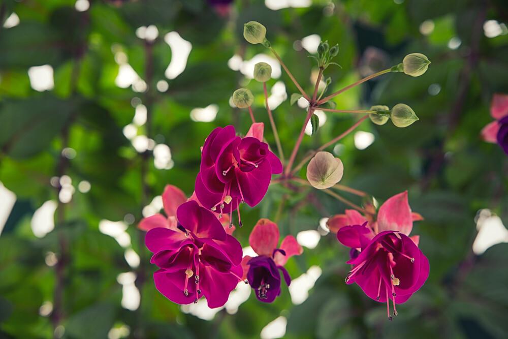 Flowers and flower buds - fotokunst von Oona Kallanmaa