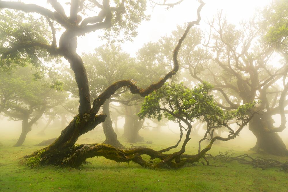 Place of fairytales - fotokunst von Anke Butawitsch
