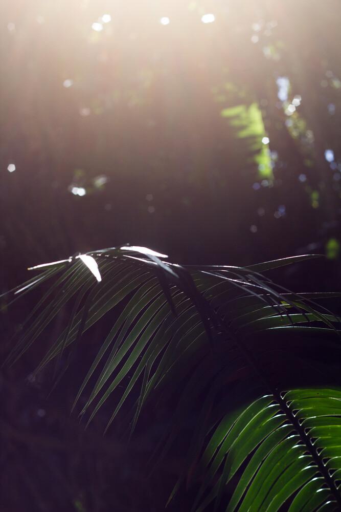 Palmwedel - fotokunst von Friederike Lenz