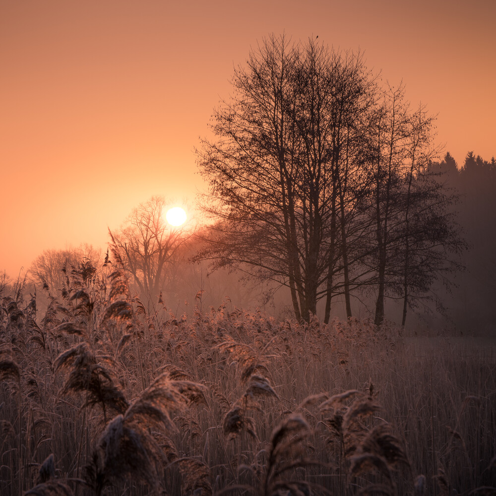 first light - Fineart photography by Anke Butawitsch