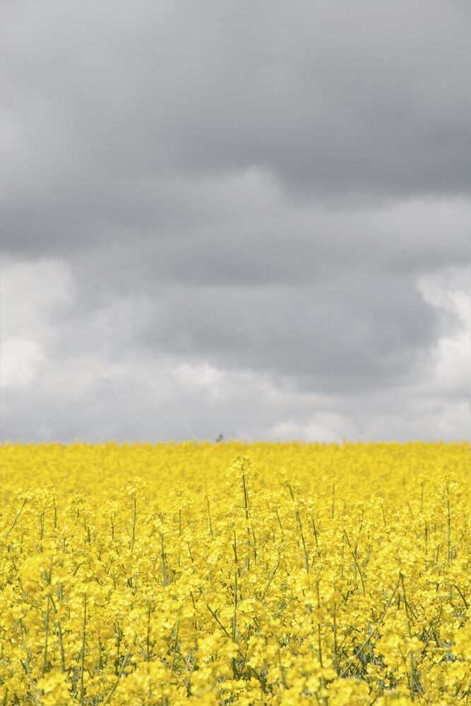Grey and yellow fields - Fineart photography by Studio Na.hili