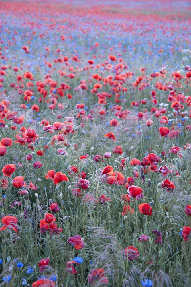 Poppy Seed Heaven - fotokunst von Studio Na.hili