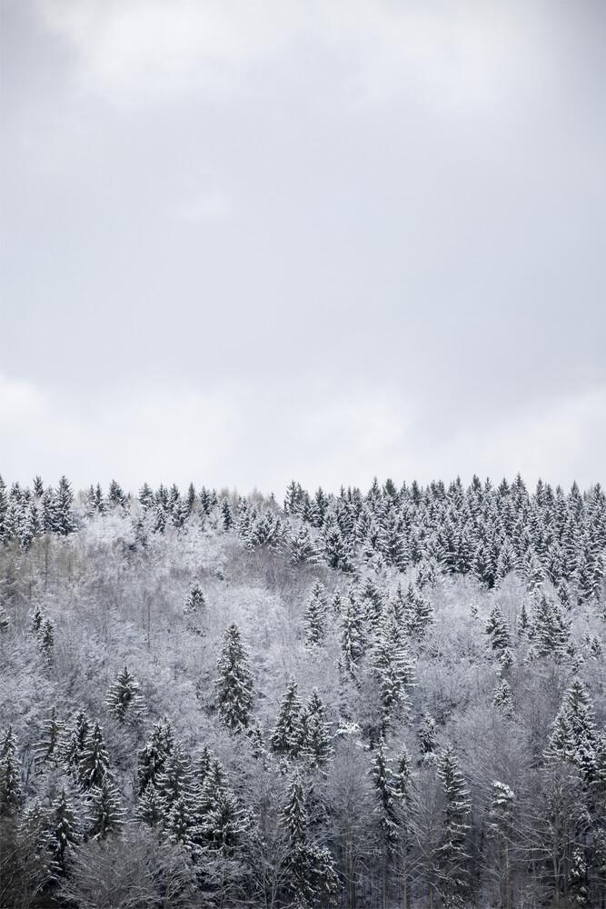 White Winter Forest - fotokunst von Studio Na.hili