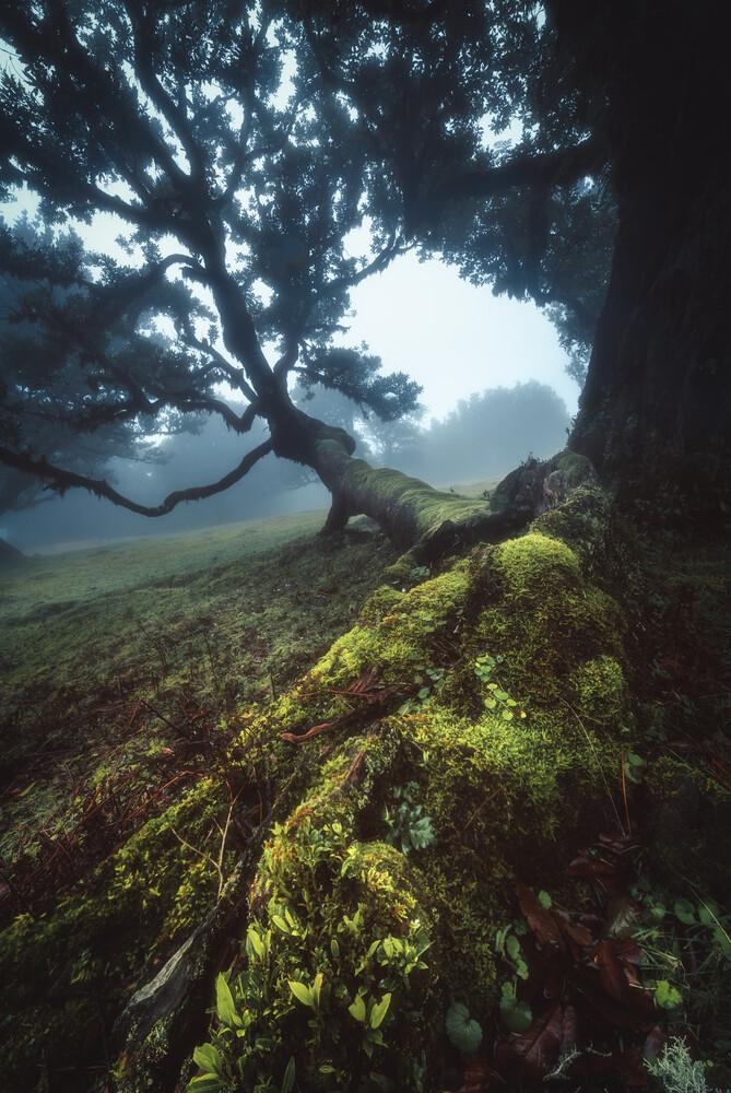Madeira Fanal Nebelwald - fotokunst von Jean Claude Castor