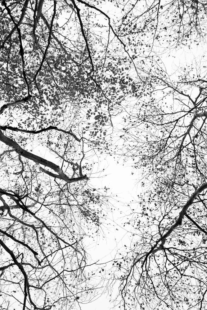 Reaching into the Sky - fotokunst von Studio Na.hili